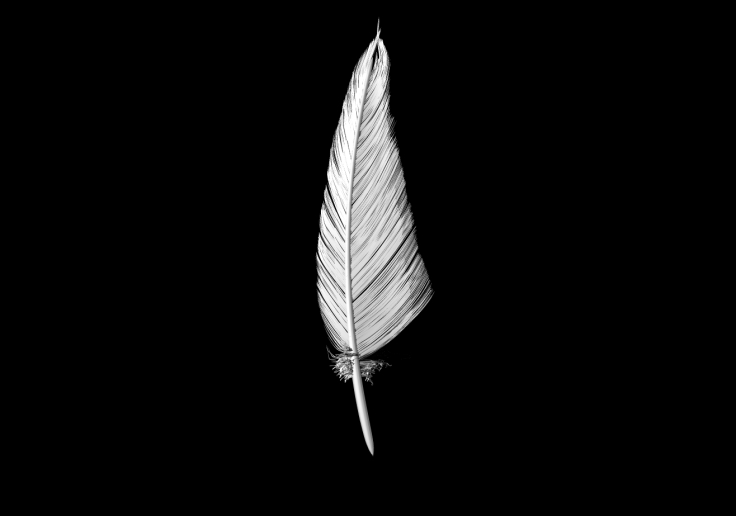 3D Feather Sculpt 3