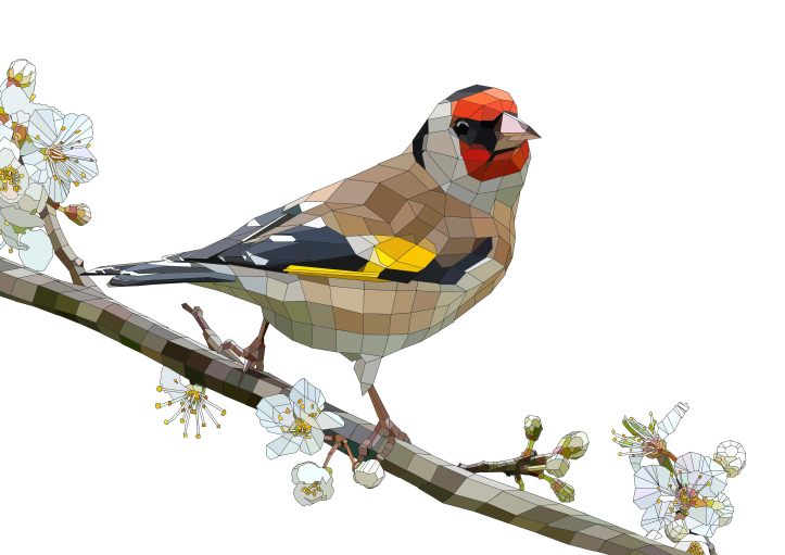 """The Goldfinch"" 2013 Tim Coster"