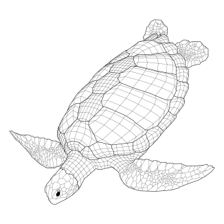 The Green Sea Turtle