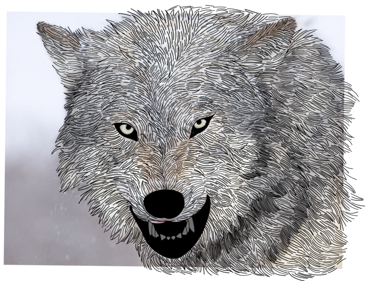 WolfDrawing-01